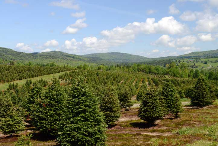 View of Weir Tree farms
