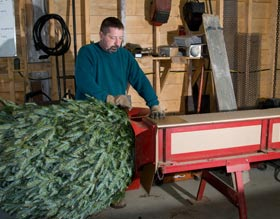 Packing Trees for shipment