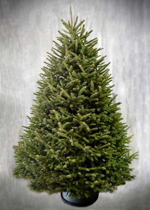 Top Rated Christmas Trees